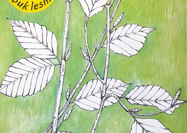 predni_cast_obalu_stromy